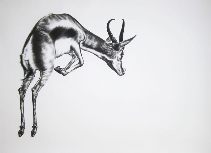 Pronk | 2016 | 0.9 x 1.4m | Charcoal on Paper  ****