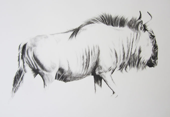 Wildebees in die Gras | 2015 | 62 x 93cm | Charcoal on Fabriano-paper | Current Location, Baden, Switzerland ***