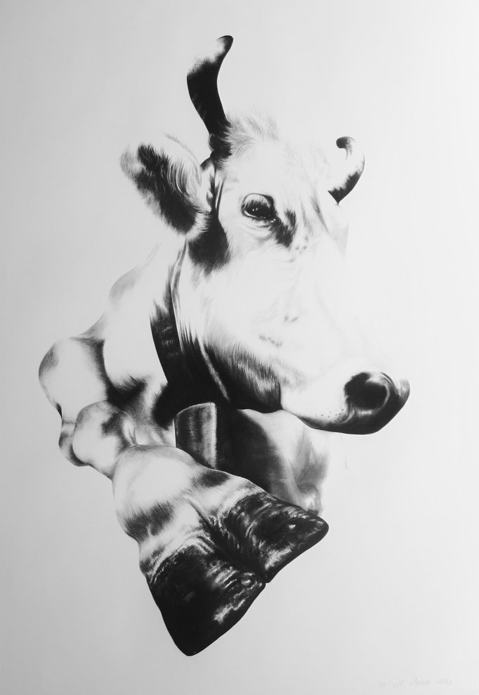 Schweizer Kuh V   2014   0.7 x 1m   Charcoal on Fabriano-paper   Current Location, Baden, Switzerland ***