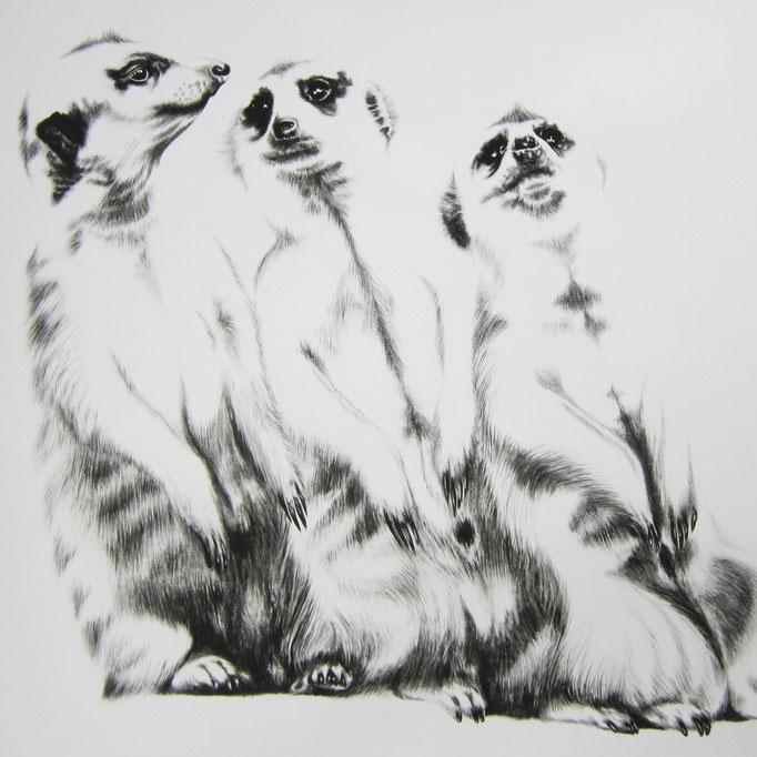 Drie meerkaaie sit op die stoep | 2015 | 60 x 60cm | Charcoal on Fabriano-paper **