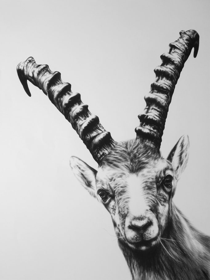 Silly Steinbock | 2016 | 90 x70cm | Charcoal on Fabriano-paper | Private Collection: Switzerland (Sold)