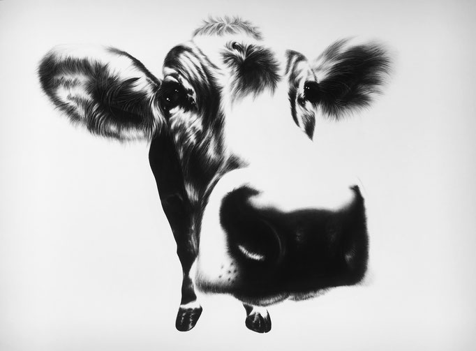 Curious Cow | 2016 |  0.7 x 1m | Charcoal on Fabriano-paper | On exhibition at Salon d'art Contemporain, Montreux, 8-12 Nov ***