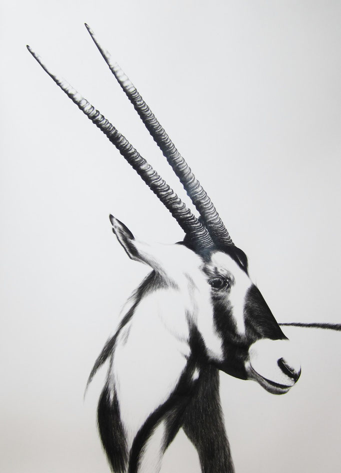 Gemsbok | 2015 | 63 x 95cm | Charcoal on Fabriano-paper | On Exhibition at Kunst in Spreitenbach, 9 Feb - 23 March ***