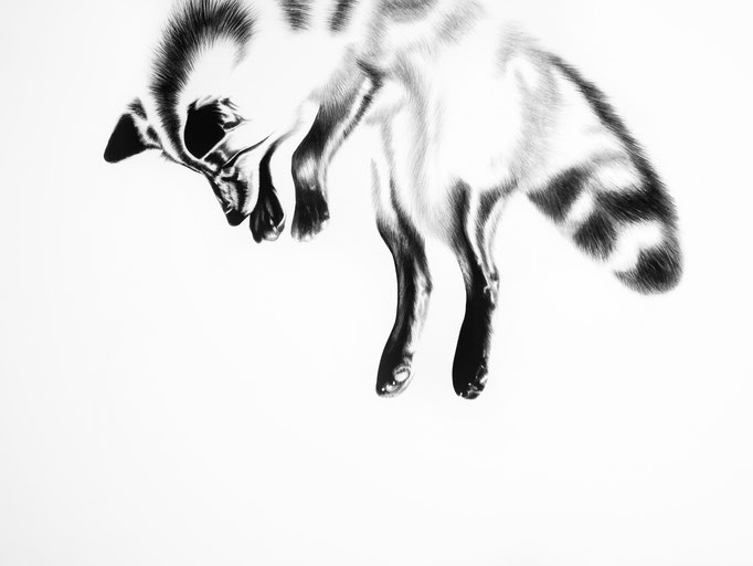 Pouncing Little Fox - Reverse Study | 2019 | 100 x 70cm | Charcoal on Fabriano-papier ***