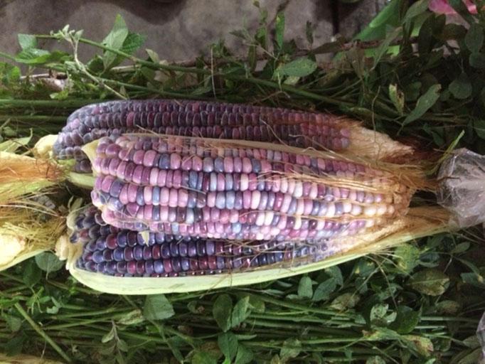 Das ist ein Mais für die Mädels, in lila-Tönen