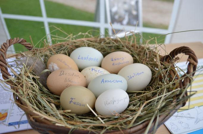 verschiedene Tiere legen verschiedene Eier