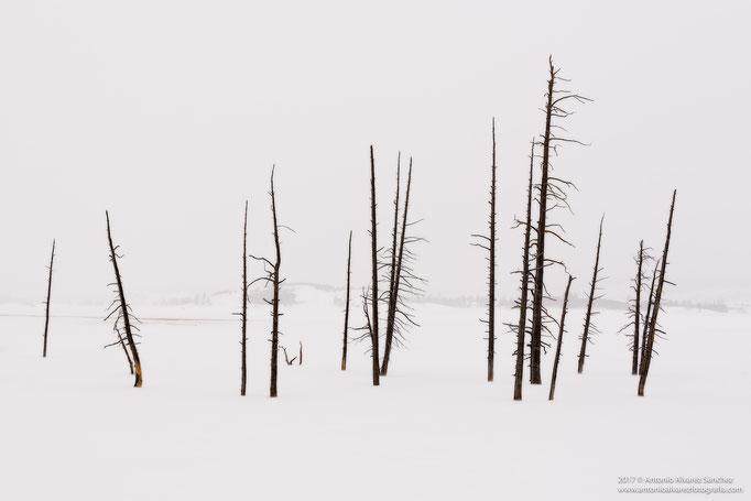 Recuerdos tristes de Yellowstone  / Sad memories of Yellowstone