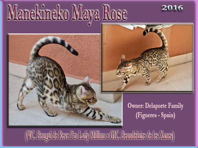 Manekineko Maya Rose 2016