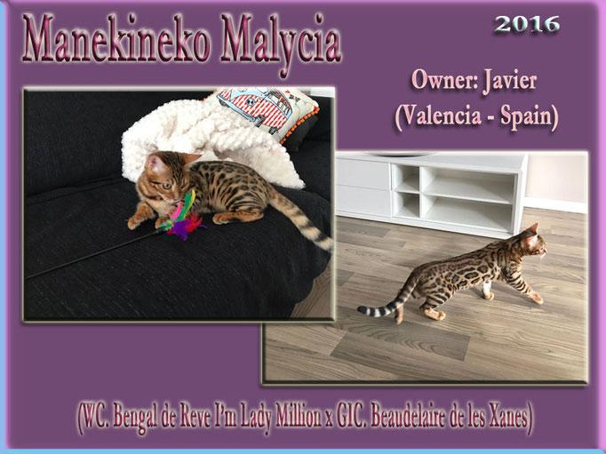 Manekineko Malycia 2016