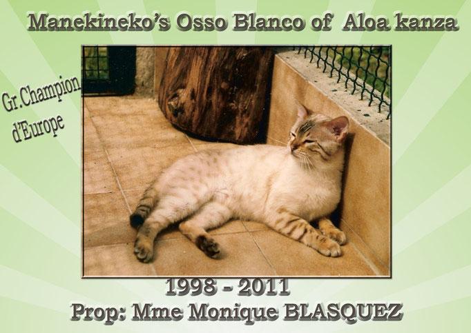 Manekineko's Osso Blanco, Mme Monique BLASQUEZ- seal lynx point