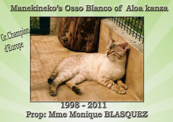 Manekineko's Osso Blanco, Mme Monique BLASQUEZ- seal lynx point
