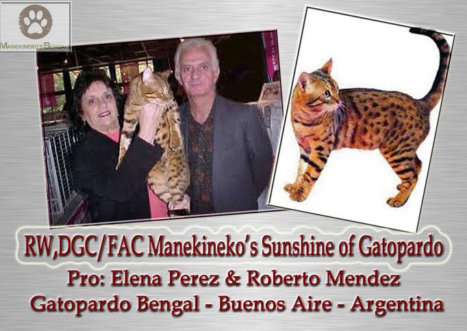 Manekineko's Sunshine of Gatopardo - Elena & Roberto Gatopardo - Argentina - GCE Oison d'avril of manekineko x Ch Manekineko's Pocahontas