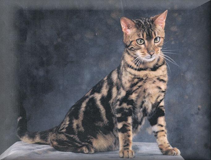 Gr.Ch.International Manekineko Pumbaa-1999