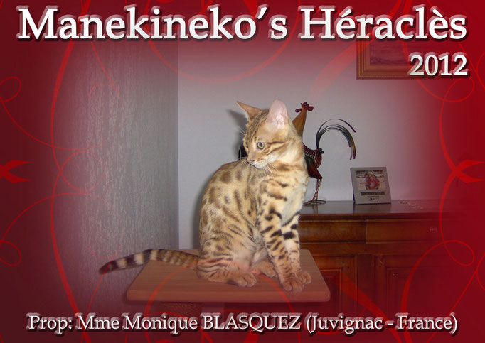 Manekineko's Héraclès-2012 - Mme Monique Blasquez - Shampoo x Invictus