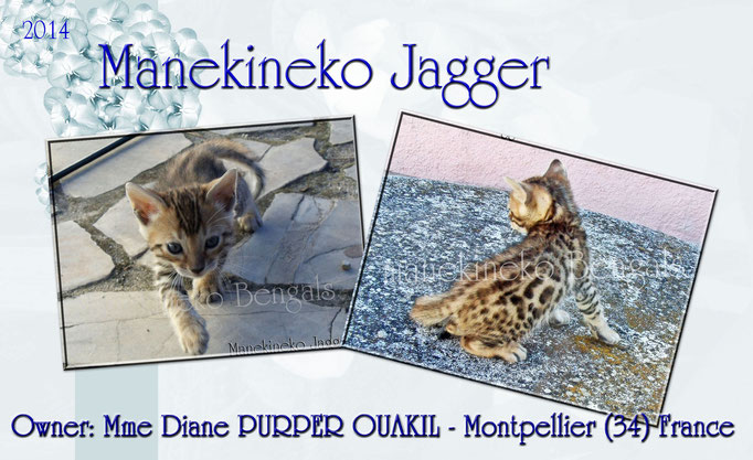 Manekineko Jagger 09/2014