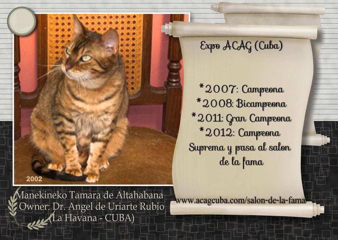 Manekineko Tamara de Lahana (2002) - Owner: Dr Angel de Uriarte Rubio (CUBA)