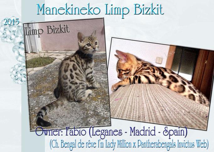 Manekineko Limp Bizkit 02/2015