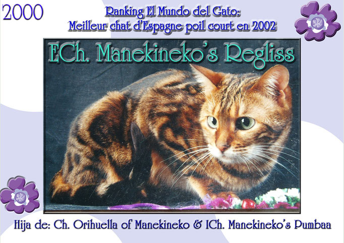 Championne  d'europe, Manekineko's Regliss, brown tabby marbled