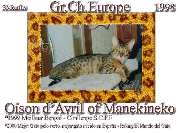 Gr.Ch.Europe Oison d'avril of Manekineko,ne en avril 1998, notre 1° portée