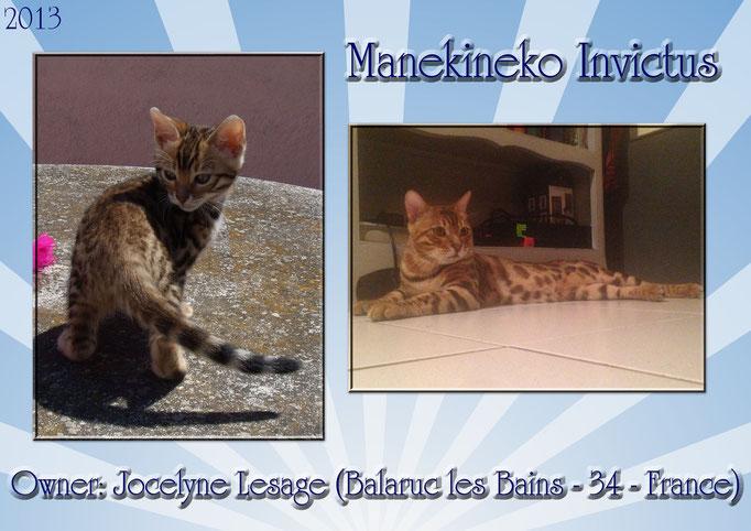 Manekineko Invictus, male 2013, owner: Jocelyne, france
