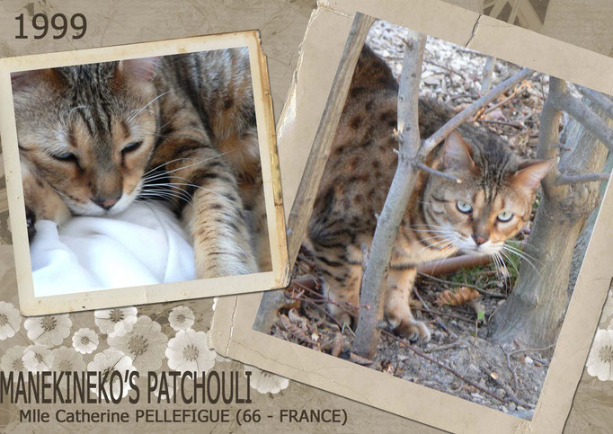 Manekineko's Patchouli - Mlle Catherine Pellefigue