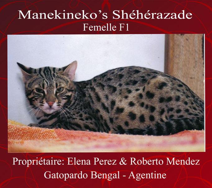 Manekineko's Sheherazade - F1- Elena & Roberto de Gatopardo Bengal Argentina