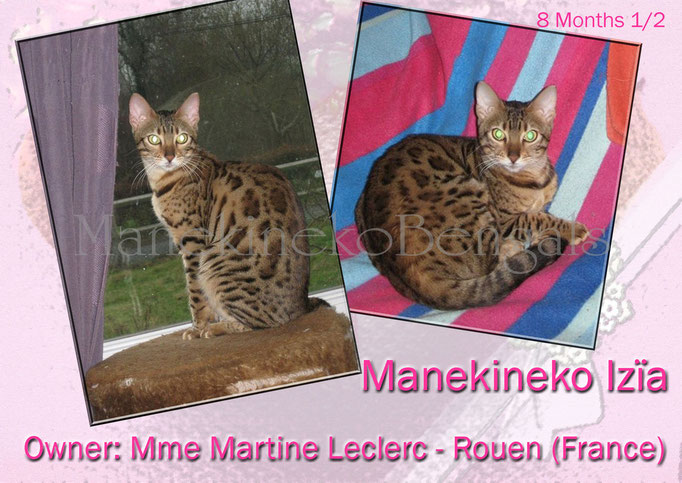 Manekineko Izia, female 2013, owner: Martine, france