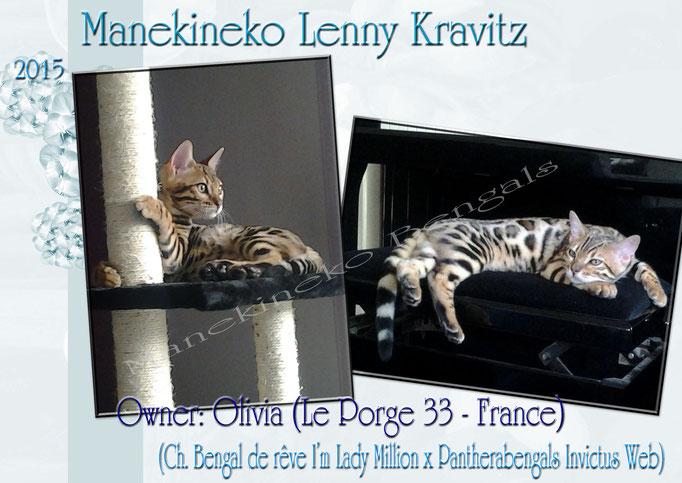 Manekineko Lenny Kravitz 02/2015
