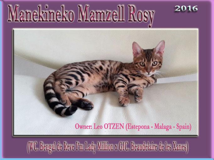 Manekineko Mamzell Rosy 2016