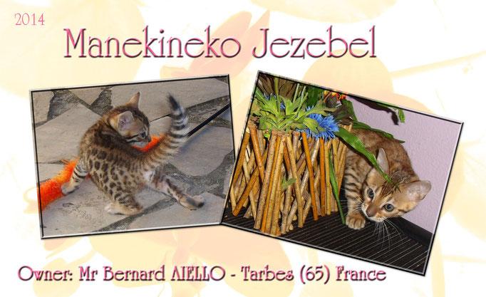 Manekineko Jezebel 09/2014