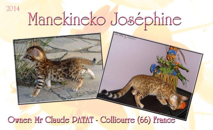 Manekineko Josephine 09/2014
