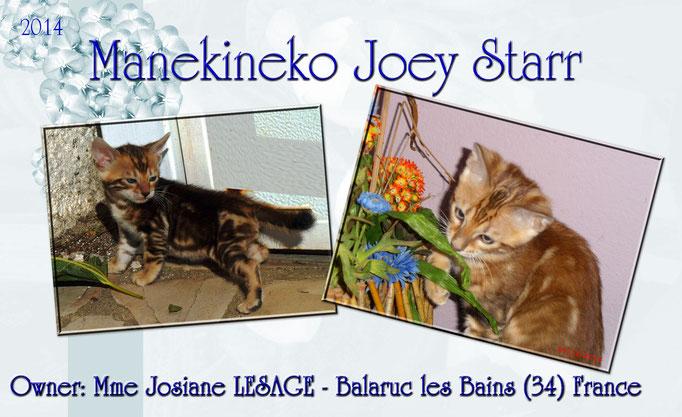 Manekineko Joey Starr 09/2014