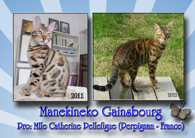 Manekineko Gainsbourg-2011_ owner: catherine france