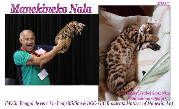 Manekineko Nala 2017