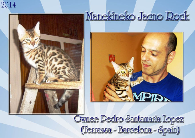 Manekineko Jacno Rock, male 2014, owner:Pedro santamaria lopez barcelona