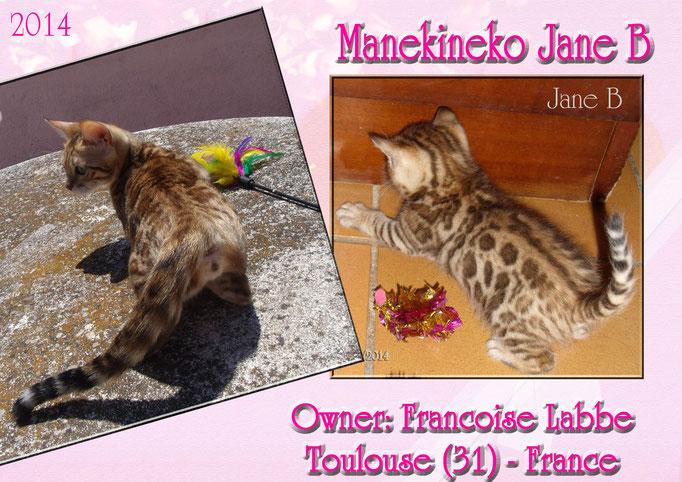 Manekineko Jane B, female 2014, owner: Francoise labbe