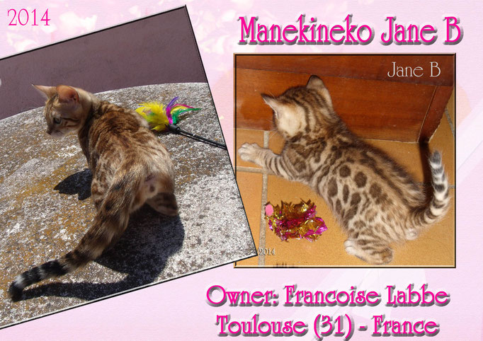 Manekineko Jane B, female 2014, owner: Francoise labbe