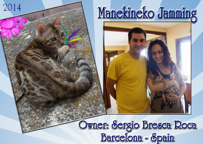 Manekineko Jamming, male 2014, owner: sergio bresca roca