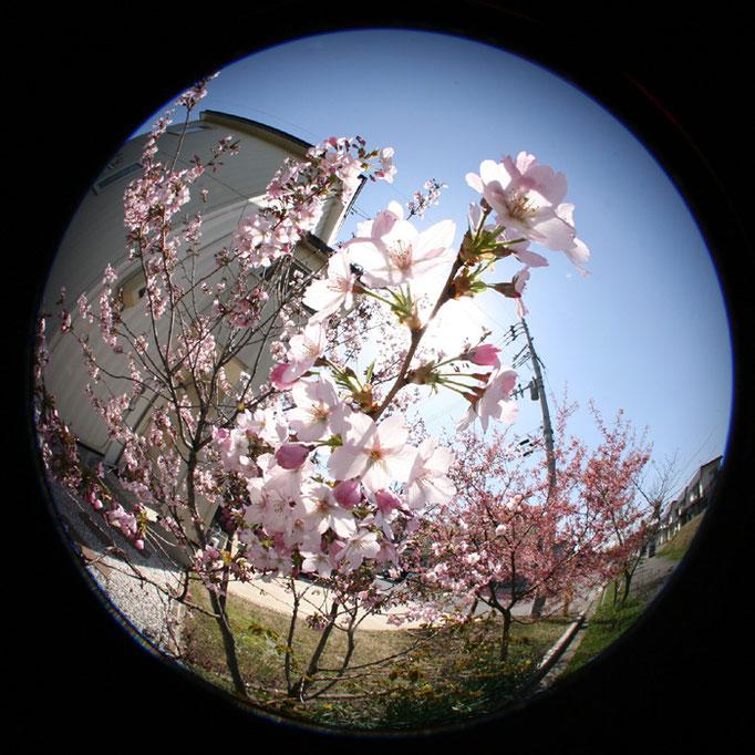 それすらも退屈な日々6/桜の夢のきらめき