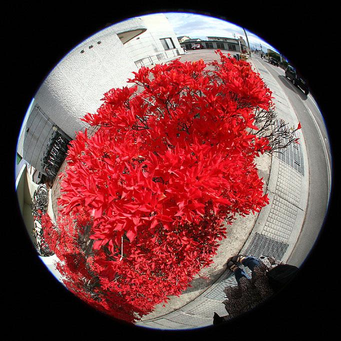 fragments18/赤い葉と私の足