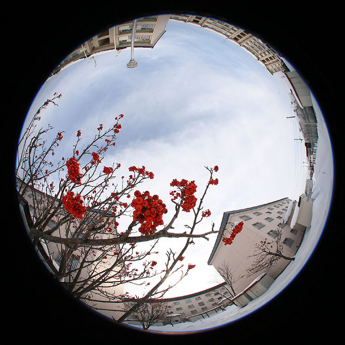 fragments7/県営住宅と赤い実