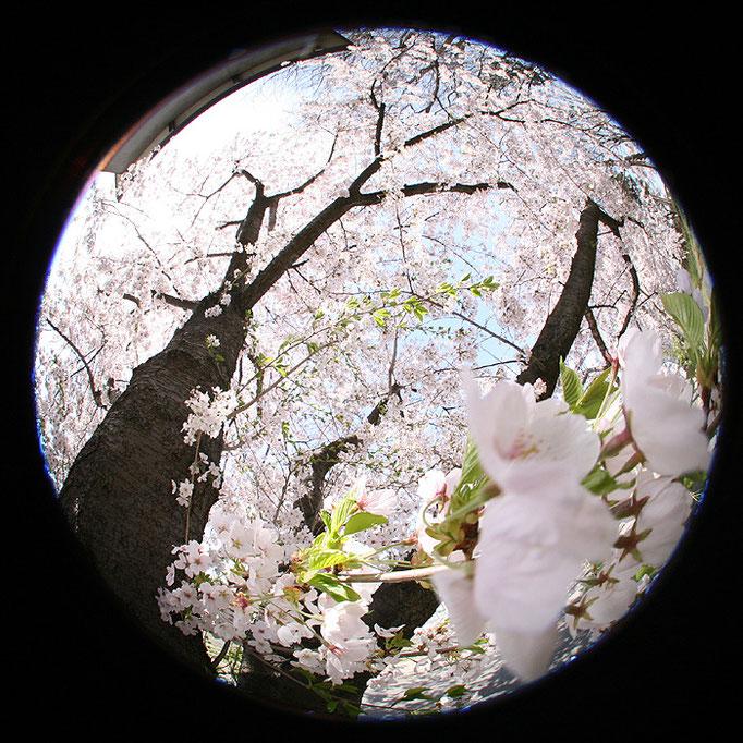 それすらも退屈な日々1/桜の夢の始まり