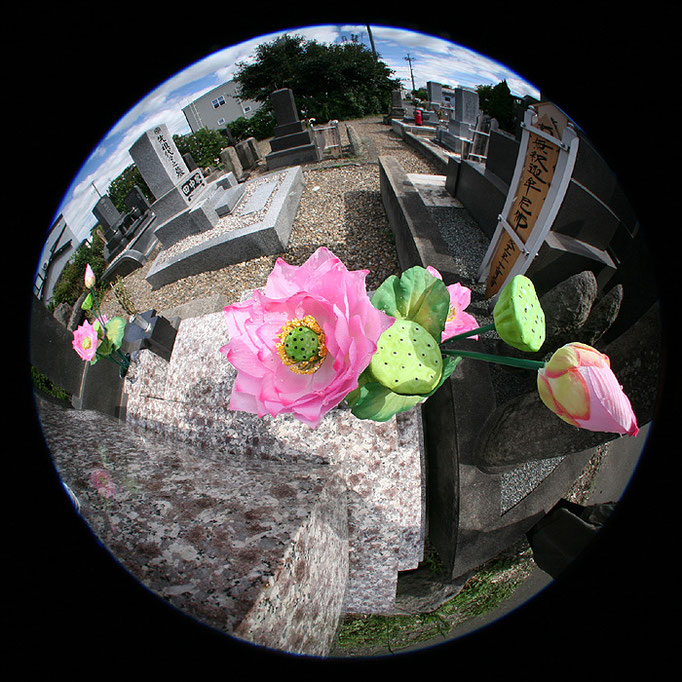 Wandering3/涅槃の華3/造花