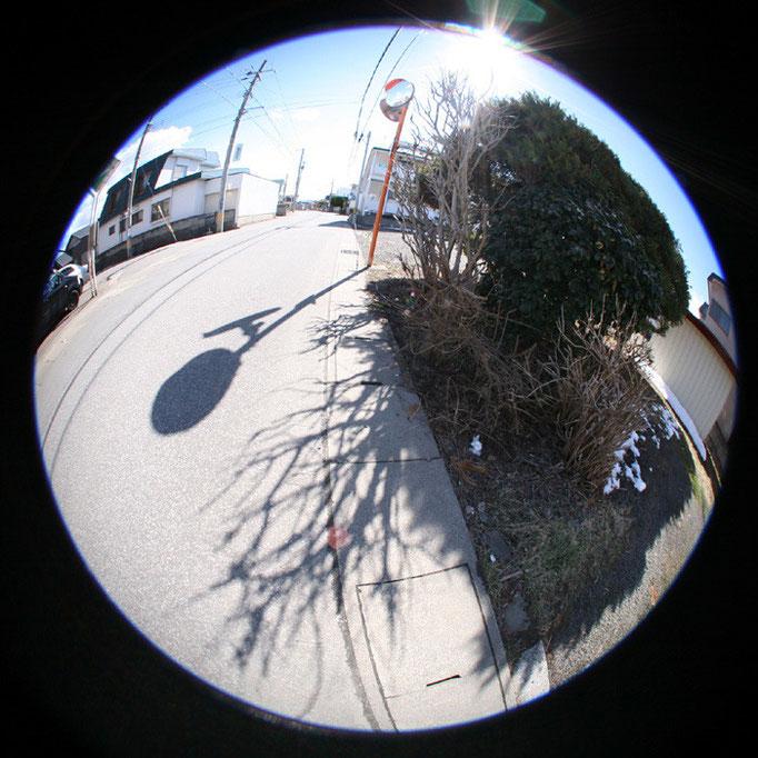 青の日々22/影の道