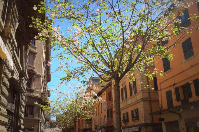 Parma, Italien