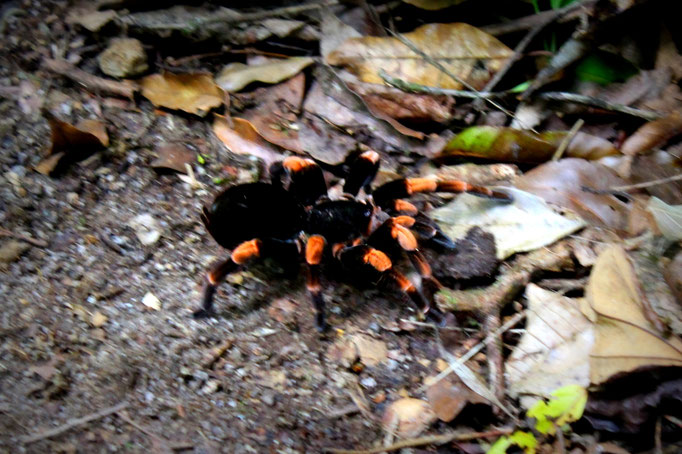 Tierwelt in Costa Rica