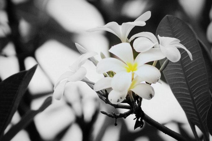 Blühendes Indonesien