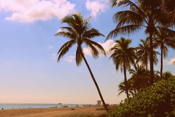 Palmenstrand an der Ostküste, Florida
