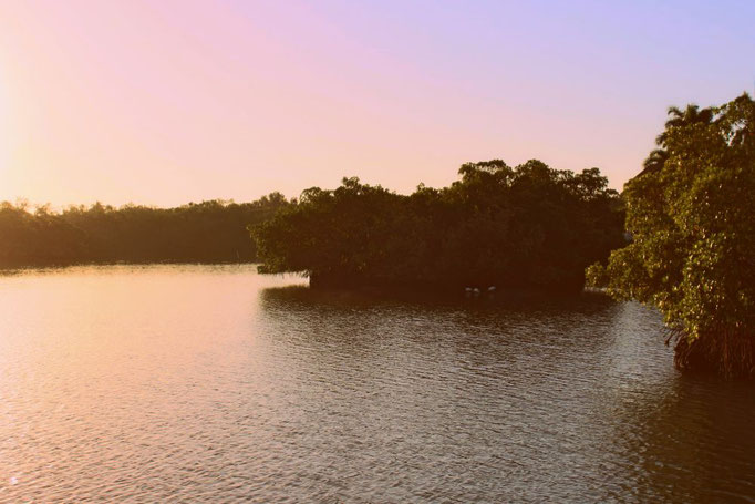 Blick über die Mangroven in Marco Island, Florida