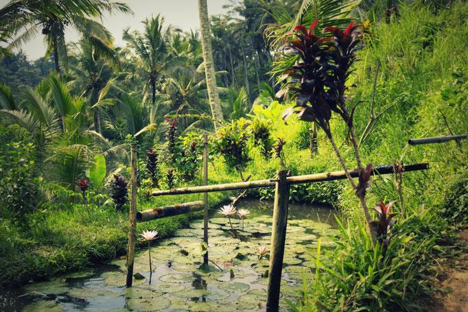 Bewässerungssystem der Reisterrassen